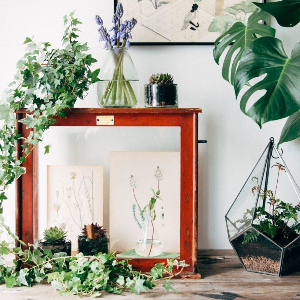 20 on trend ways to display plants and flowers in your home stylist - Elegant ways to display air plants in your home ...