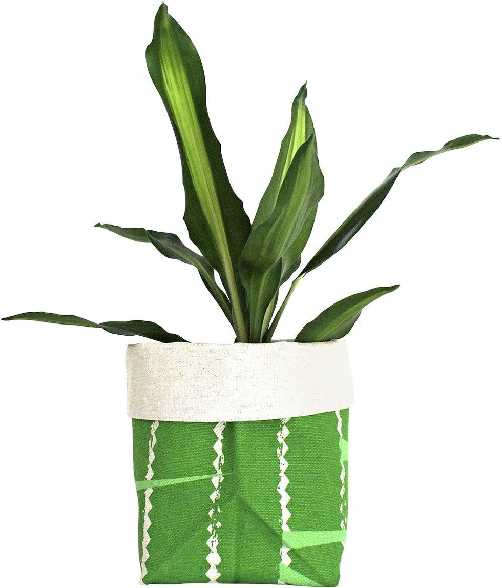 stylist lily house plant. Bucket list This week s Style List  from positive vibes to heavenly hair Stylist