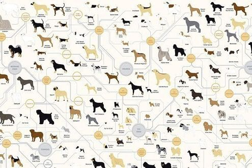 the family tree of dogs infographic stylist