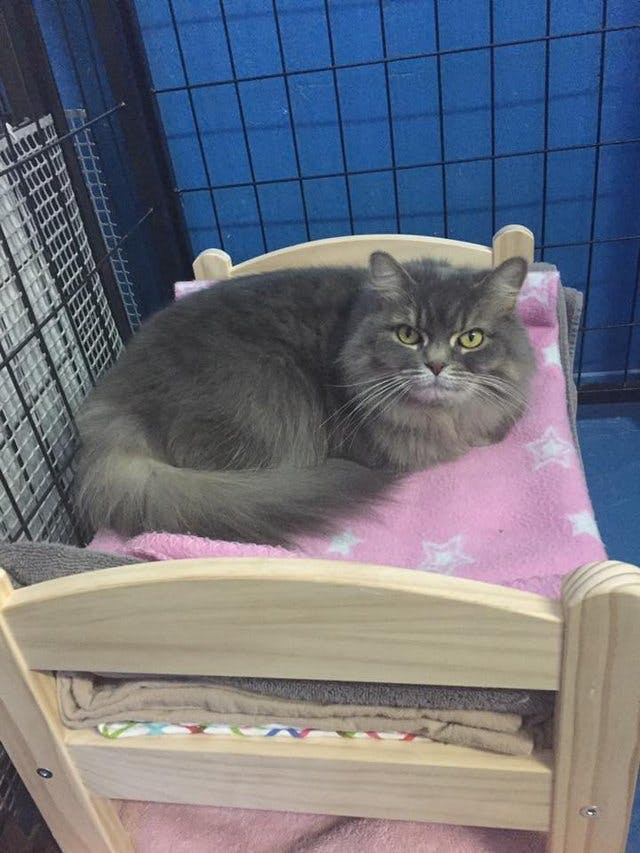 Ikea Donates Miniature Doll Beds To Animal Shelter For