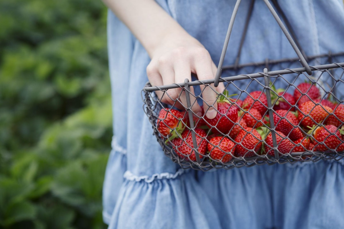 A woman holding a punnet of pick-your-own strawberries